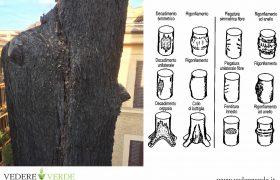 vta-analisi-stabilita-alberi-4