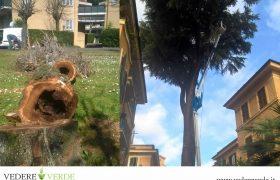 vta-analisi-stabilita-alberi-6