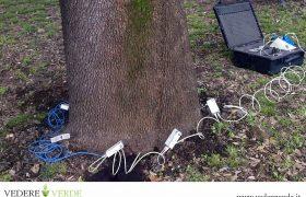vta-analisi-stabilita-alberi-2