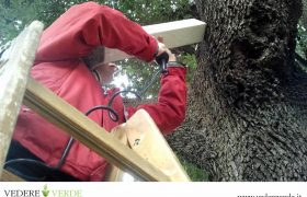 vta-analisi-stabilita-alberi-3