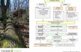 vta-analisi-stabilita-alberi-8